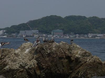 Photo_1167